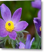 Spring Flowers 1. Flowers Of Holland Metal Print