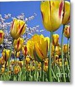 Spring Flowers 12 Metal Print