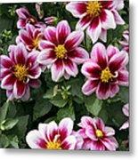 Spring Flowers 4 Metal Print