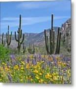 Spring Flowers In The Desert Metal Print by Elvira Butler