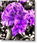 Spring Flowers Metal Print by Mark Alexander