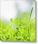 Spring Green Sprouts Metal Print by Elena Elisseeva