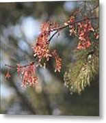 Spring Growth Bathed In Sunlight Metal Print