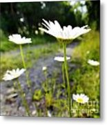 Spring In Campbell Hall Metal Print