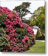Spring In Muckross Garden - Ireland Metal Print