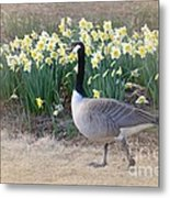 Spring In My Strut Metal Print