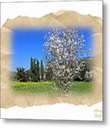 Spring In The Paper Metal Print