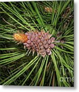 Spring In The Pines Metal Print by The Stone Age