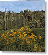 Spring In The Superstition Wilderness Metal Print