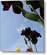 Spring Iris Skies Metal Print