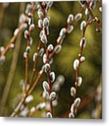 Spring Is Springing Metal Print by Thomas Young