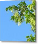 Spring Leaves And Sky Two Metal Print