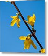 Spring Lights Metal Print