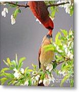 Cardinal Spring Love Metal Print