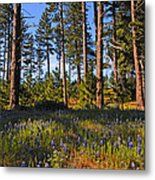 Spring Lupines In The Forest Metal Print