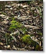 Spring Moss Metal Print