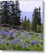 Spring Mountain Lupines Metal Print