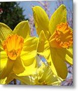 Spring Orange Yellow Daffodil Flowers Art Prints Metal Print