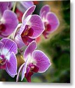 Spring Orchids I Metal Print