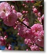 Spring Pink Flowering Metal Print