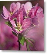 Spring Pink... Metal Print