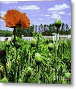 Spring Poppies Metal Print
