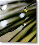 Spring Rain On The Pines Metal Print