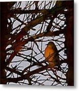 Spring Robins Gather Metal Print