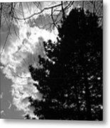 Spring Sky And Pine 1 Bw Metal Print