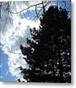 Spring Sky And Pine 1 Metal Print