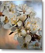Spring Smells Of Cherries Metal Print