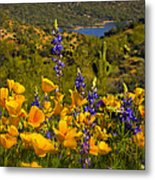 Spring Southwest Style  Metal Print