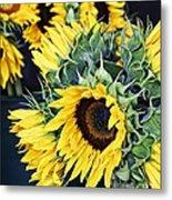 Spring Sunflowers Metal Print