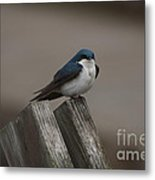 Spring Swallow Metal Print