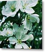 Spring Time Blossoms Metal Print