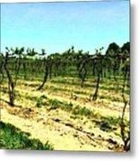 Spring Vineyard Ll Metal Print