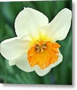 Spring White Metal Print by Cathie Tyler