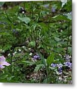 Spring Wildflowers Along Panther Branch Trail Frozen Head Tennessee State Park Tennessee Metal Print