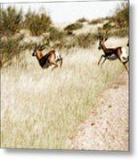 Springbok Running Metal Print