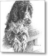 Springer Spaniel Dog Pencil Portrait Metal Print