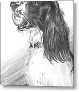 Springer Spaniel Playing Fetch Pencil Portrait Metal Print