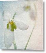 Springflower Metal Print