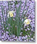 Springtime Beauties Metal Print