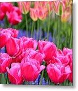 Springtime Blooms In Holland Metal Print