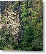 Springtime Forest Blossoms  Metal Print