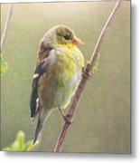 Springtime Goldfinch Metal Print