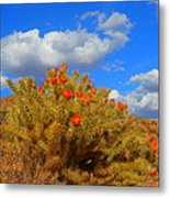 Springtime In Arizona Metal Print