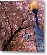 Springtime In Charlotte Metal Print by Lydia Holly