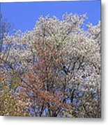 Springtime In Great Balsam Mountains Metal Print
