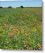 Springtime In Texas 6 Metal Print